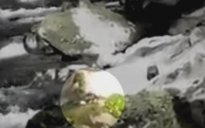Campista sobrevivió una aterradora caída en un parque nacional de Washin...