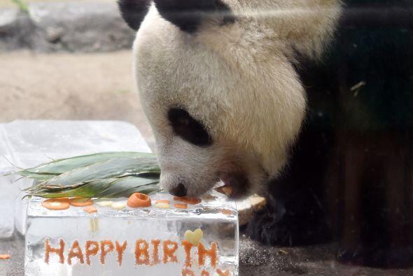 Y porque hasta los pandas cumplen años, aquí esta tierna celebración.