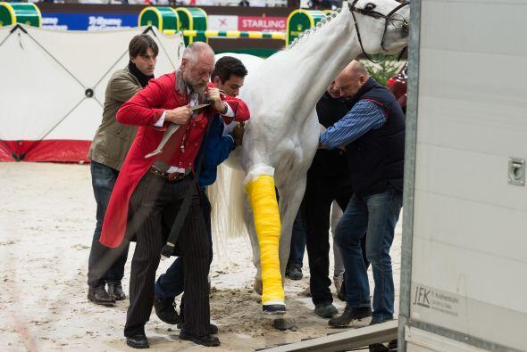 Se tuvieron que llevar al caballo con una grúa.