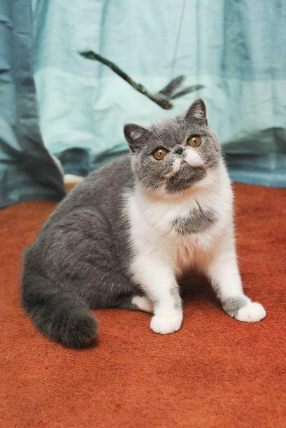 Pero este gatito no siempre fue una celebridad.