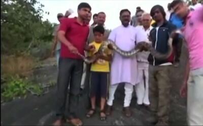 Joven es mordido por una serpiente al intentar tomar una selfie