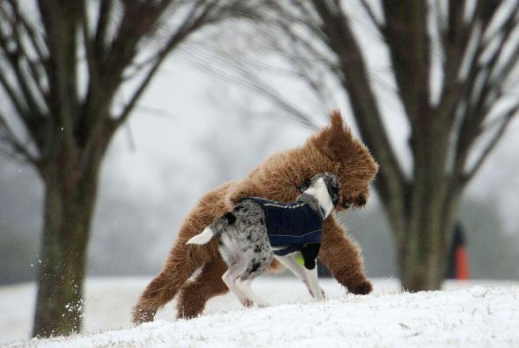 Dos mascotas juegan en un parque de Nueva York.