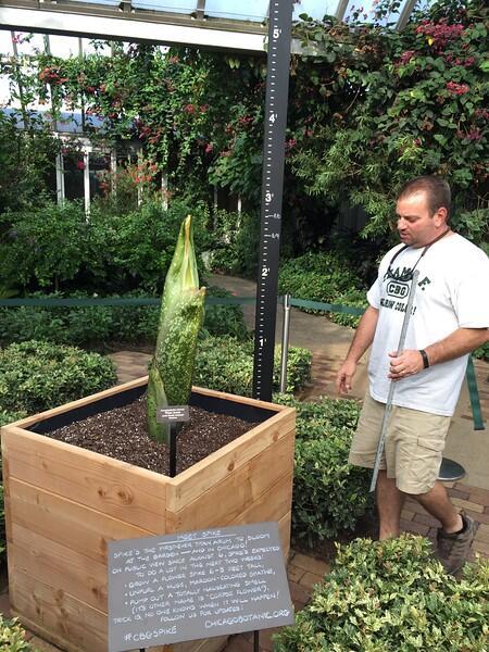"""El Chicago Botanic Garden tendrá en exhibición la """"Titan Arum"""", también..."""