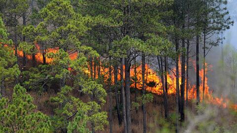 Biodiversidad bosque.jpg