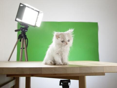 Este gatito es el protagonista de una serie de fotografías surrea...