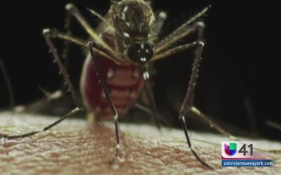 Autoridades alertan a mujeres embarazadas sobre los peligros del zika
