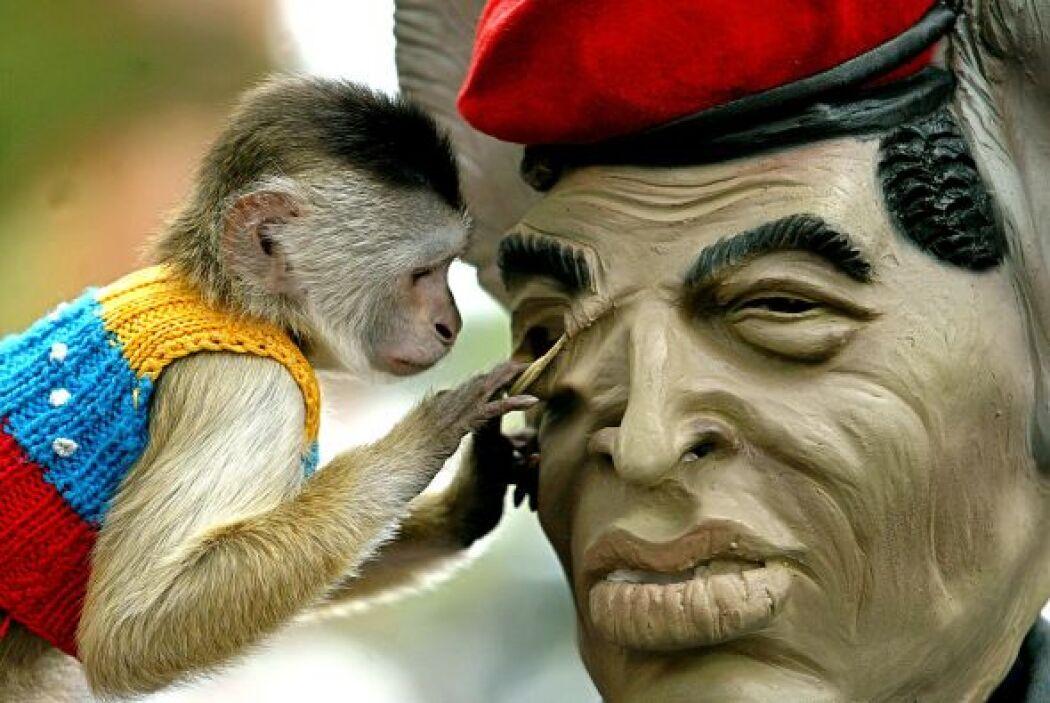 Aquí, un mono juega con una máscara de goma que representa a Chávez.