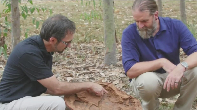 La huella más grande de un dinosaurio fue encontrada en Australia
