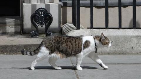 Larry the Cat: El gato que adoptó el primer ministro británico que niega...