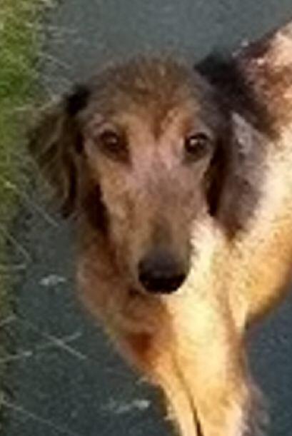 El perro Dylan fue abandonado cerca de Bridgend, Gales en Reino Unido. E...