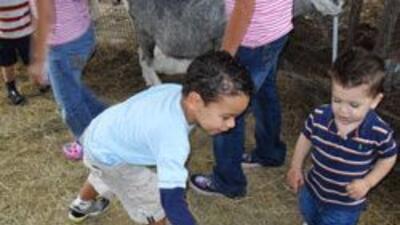 Una granja para los más chiquitos. Contacto pleno con los animales e4cd3...