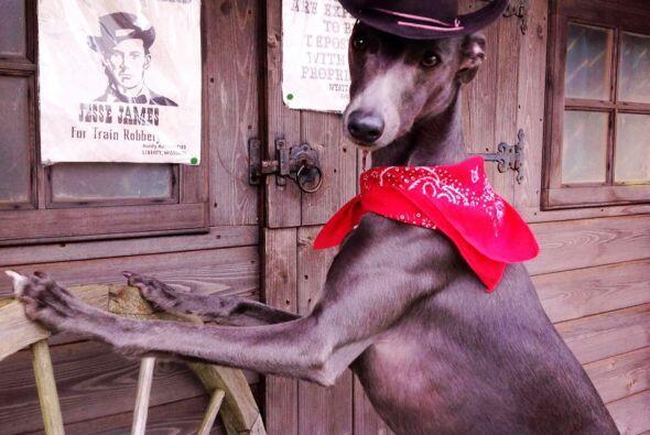 Un perro vaquero muy sexy.