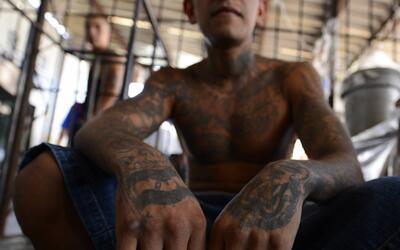 Actos violentos y sin piedad, la firma de la pandilla Mara Salvatrucha