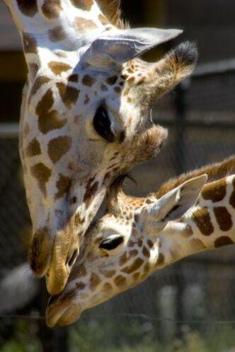Pero también existe un zoológico lleno de especies maravillosas.