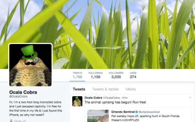 En su foto de perfil de Twitter, @OcalaCobra luce un bigote, un monóculo...