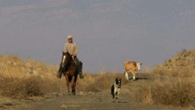 En Siria autorizan a comer gatos, perros y burros para no morir de hambre.