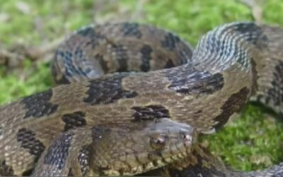 Tenga cuidado con las serpientes en las temporadas de lluvias