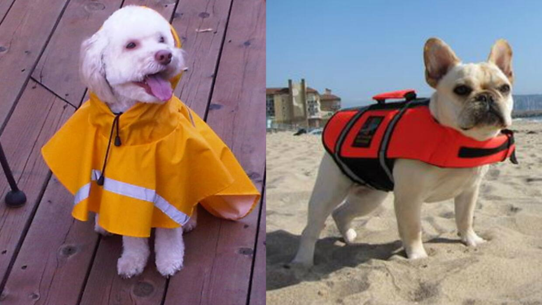 Mascotas y huracanes