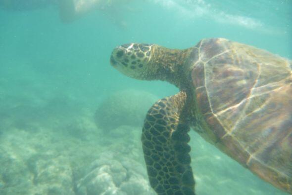 Su paseo duró varios minutos debajo del agua.