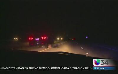 Cruel acción de coyote captada en video