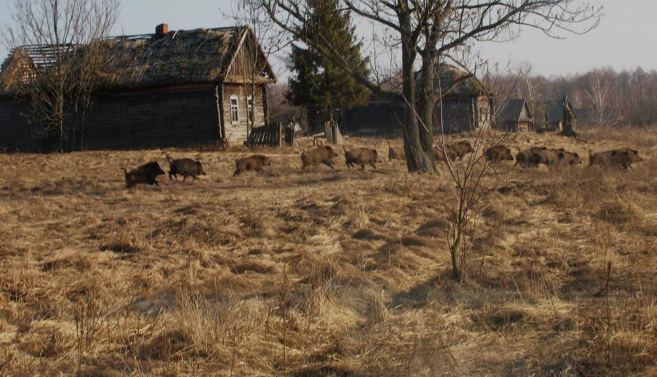 Animales en Chernóbil