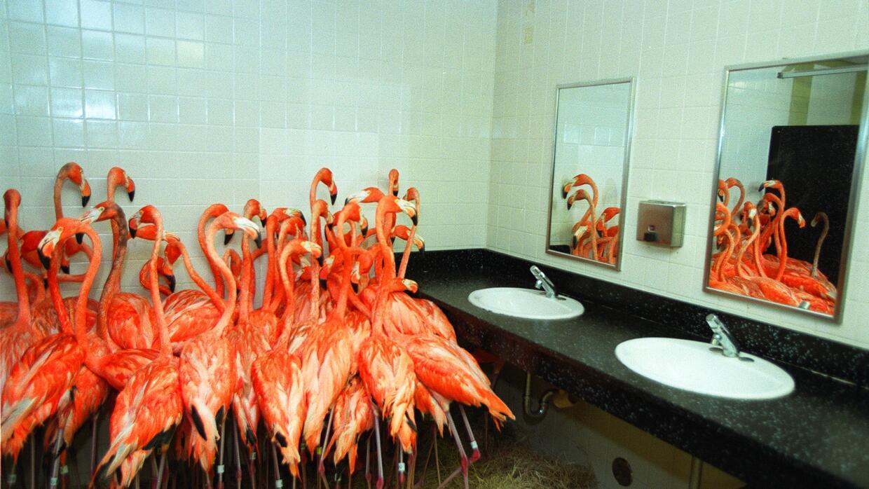 Flamingos en el baño del zoo de Miami el 14 de setiembre de 1999 durante...