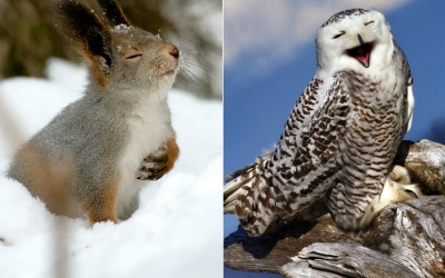 Animales listos para cantar