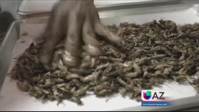 Insectos: ¿Feos pero nutritivos?