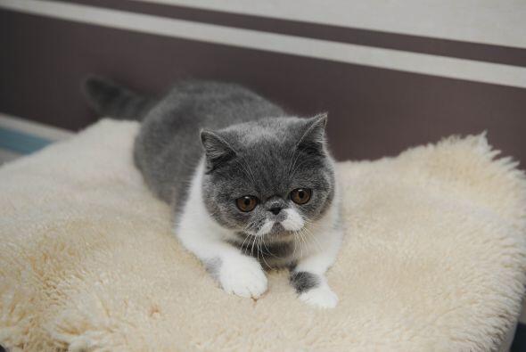 Pero hay que decirlo, el felino brilla por su propio carisma dejando a s...