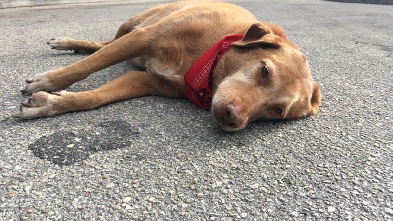Perro se queda en el lugar donde murió su dueña