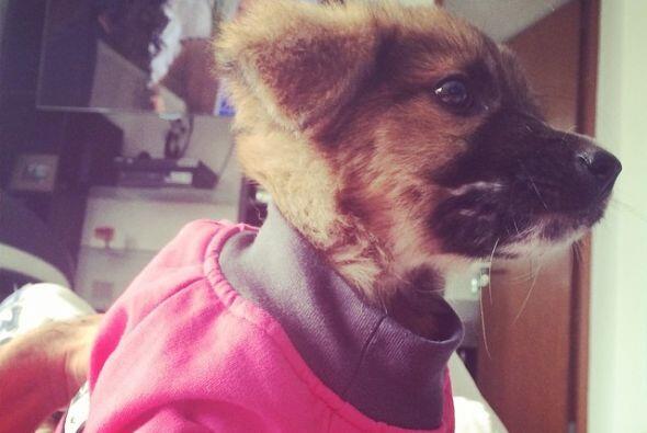 Después de qué la rescató, la llevó al veterinario para que tuviera todo...