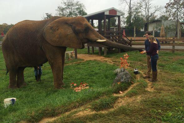 Ian Cavallier estaba feliz de haber encontrado un elefante que pudiera e...