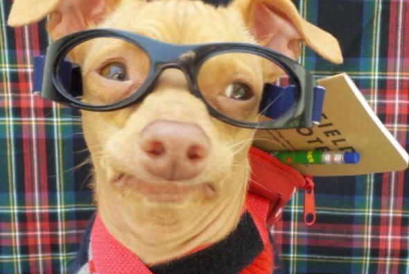 El siguiente en la lista es Tuna, tal vez no es el perro mas lindo pero...