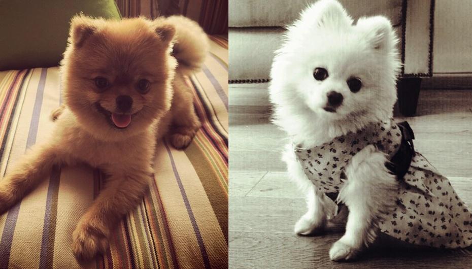 Estas dos hermosas perritas son tan famosas como sus dueñas, Thalía y Yo...