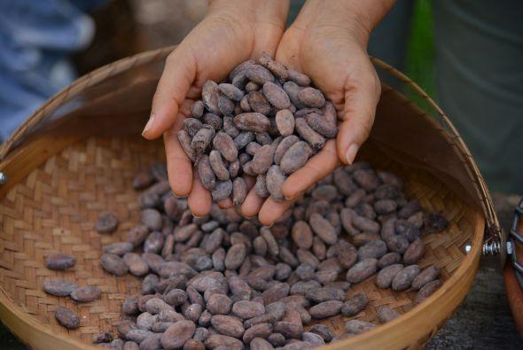 Perú es uno de los países con mayor calidad en la producción de cacao.