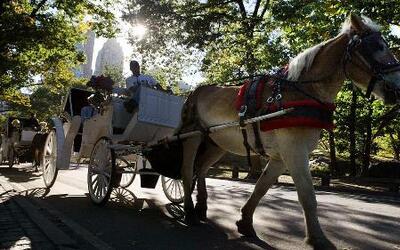 Aumento de precios en paseos en Central Park