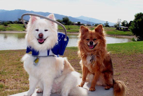Este invento le devuelve la seguridad a los perros además de que les per...
