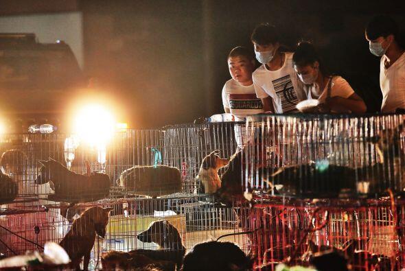 Eran cinco camiones que transportaban a más de dos mil perros que...