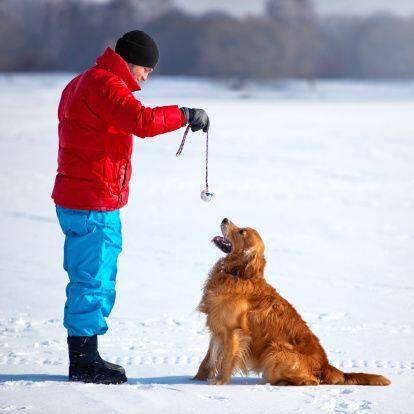 A los amigos peludos des encanta jugar en la nieve, sobre todo, si es un...