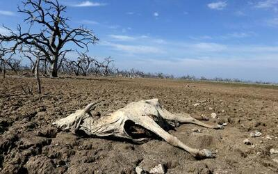 Paraguay está padeciendo una crisis ecológica de tremendas dimensiones....