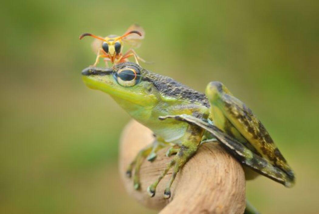 Después de un rato, la avispa voló para buscar otro amigo sobre el cual...