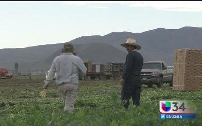 Parte 2: Explotación y robo de salarios a trabajadores del campo en CA