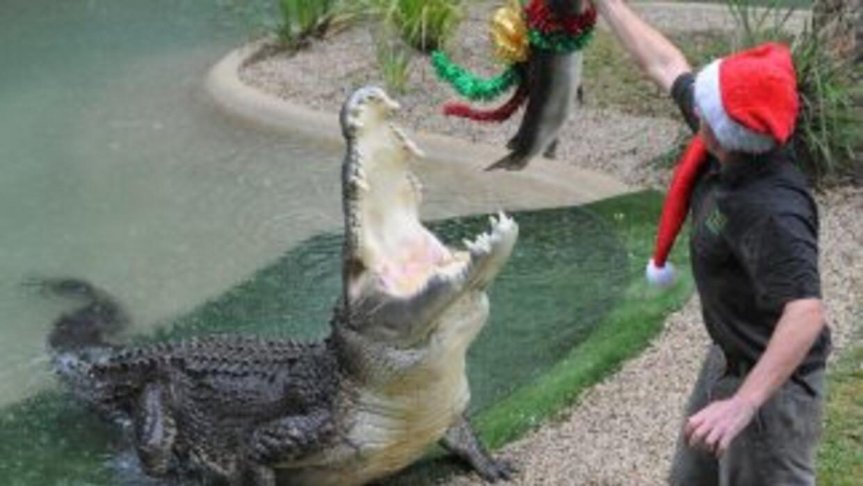 Un cocodrilo salvaje devoró a una niña de diez años mientras se encontra...