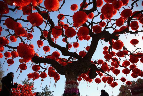 Un visitante mira los árboles decorados con linternas rojas dispuestas p...