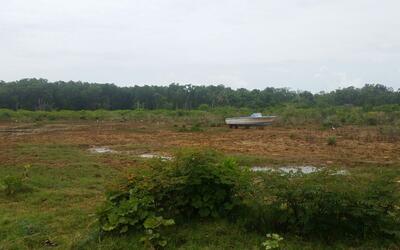 Restauración Bosque Estatal de Ceiba