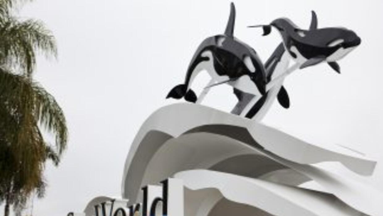 La entrenadora Dawn Brancheau murió el 24 de febrero cuando una orca la...