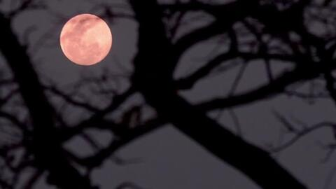Así se vio anoche la imponente luna llena rosada