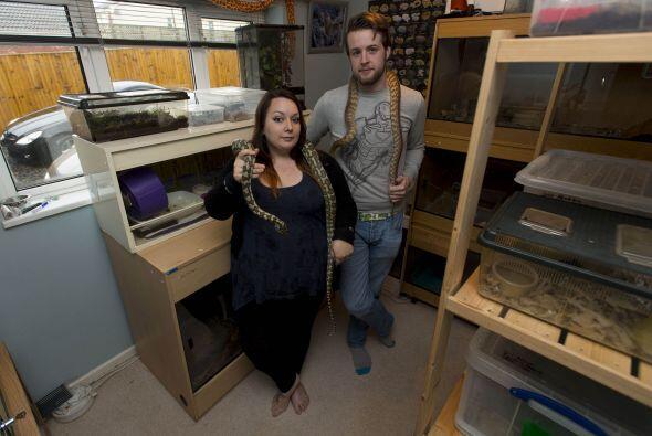 Las serpientes tienen un cuarto especial, adaptado solo para ellas.