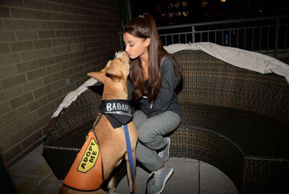 Los perros a los que apoya forman parte de la organización BADA** Brookl...