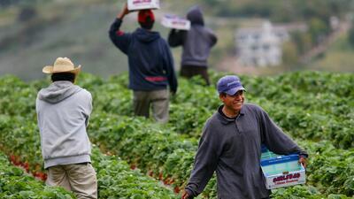 Trabajadores del campo indignados de comentarios de Trump